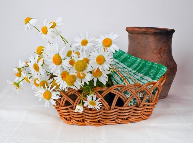 daisies-314435_640