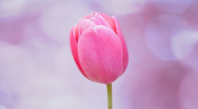 flower-821781_640