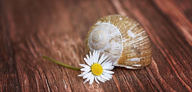 shell-772076_640