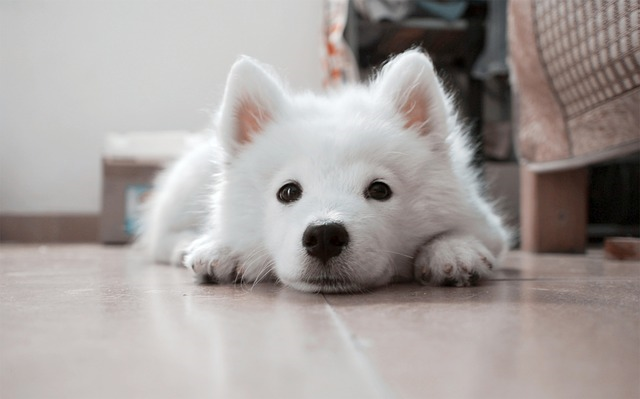 dog-617041_640 (1)