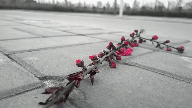 flower-715757_640