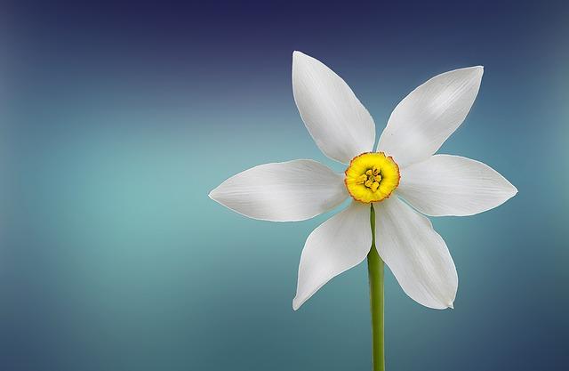 flower-729513_640