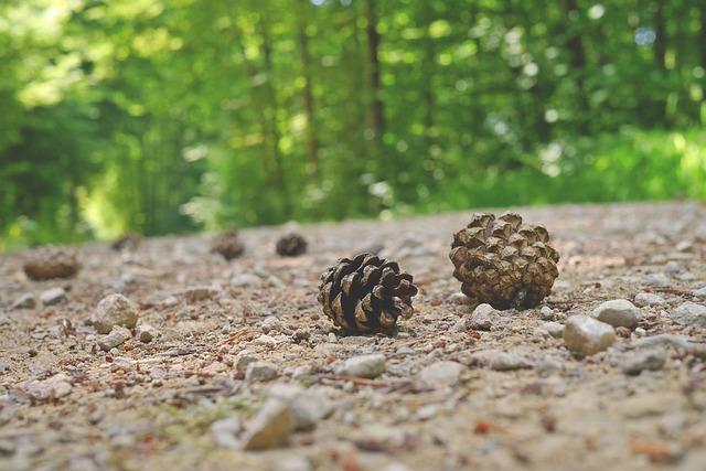 pine-cones-800478_640
