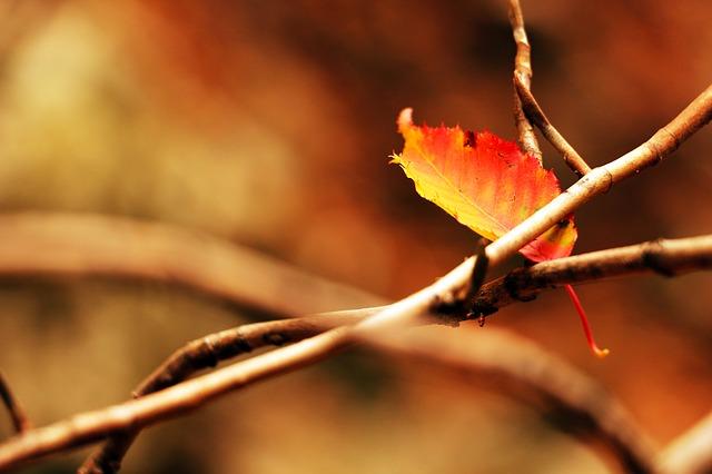 autumn-507550_640