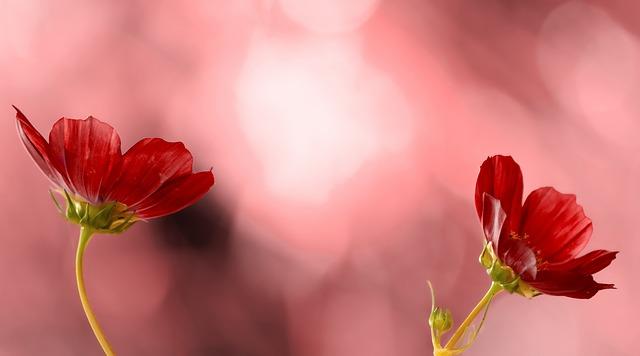 flower-953381_640