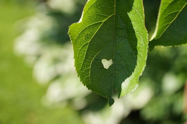 leaf-517156_640