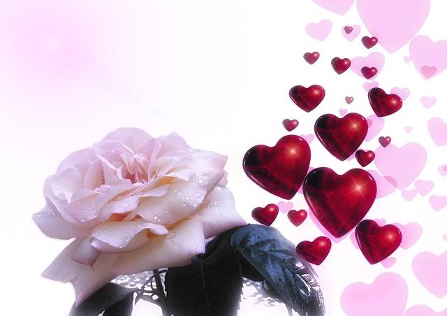 rose-76089_640
