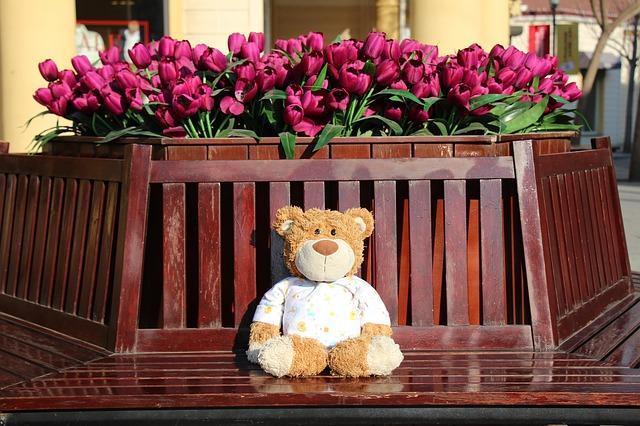 the-bear-599149_640