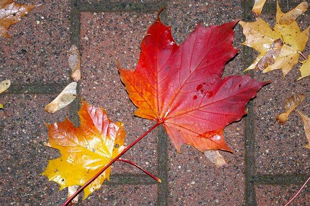 autumn-991028_640