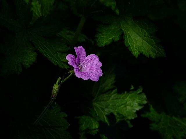 flower-193588_640