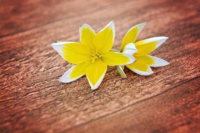 flowers-747206_640