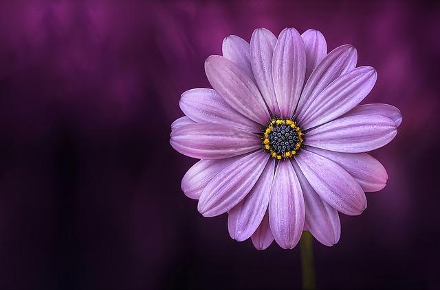 flower-729512_640