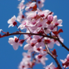 【ご予約状況】3月摂食障害専門カウンセリング