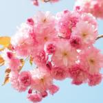 【ご予約状況】4月摂食障害専門カウンセリング