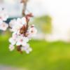 【2020年3月】摂食障害専門カウンセリング・スケジュール