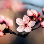 【受付中!】3/25 摂食障害 接し方講座